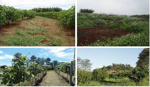 Fruticultura de Clima Temperado e Subtropical