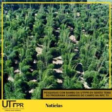 Pesquisas com bambu da UTFPR Câmpus Dois Vizinhos serão tema do programa Caminhos do Campo na RPC TV