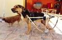 Protótipo construído para o cão Faísca