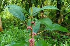 Planta é encontrada na região Sudoeste (Imagem: Freepik)